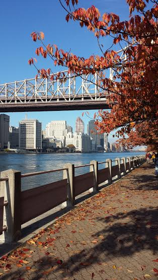 Ed Koch-Queensboro Bridge viewed from Roosevelt Island.