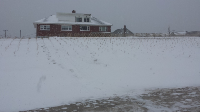 Belle Harbor dunes after snowstorm of 1/27/15.
